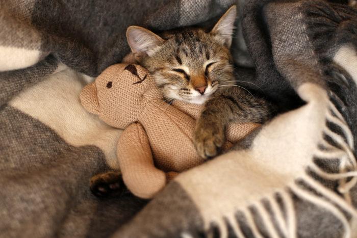 子猫の食生活の特徴とは?