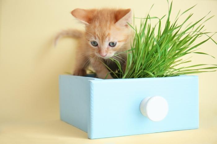 成猫に成長するまでの子猫