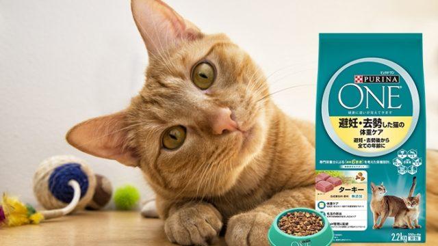 ピュリナワン猫用は安全?口コミ評判やキャットフード成分を徹底評価