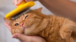 猫が毛玉や食事を吐く原因って?意外と簡単な対策方法を徹底解析!