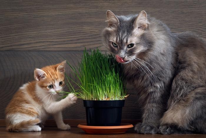 猫草を活用しよう!
