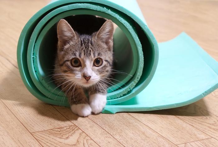 猫が吐かない対策方法
