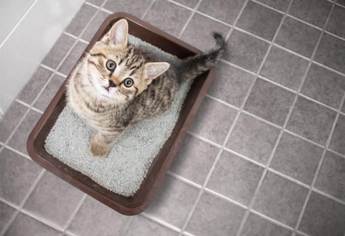 猫の尿路結石を予防するキャットフードの選び方とおすすめランキング