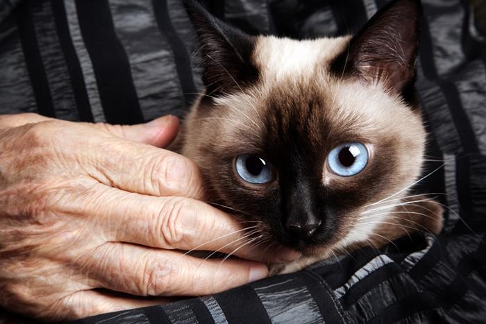 シャム猫の平均寿命